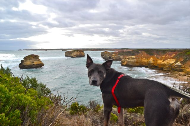Dog Friendly Caravan Park Merrimbulla