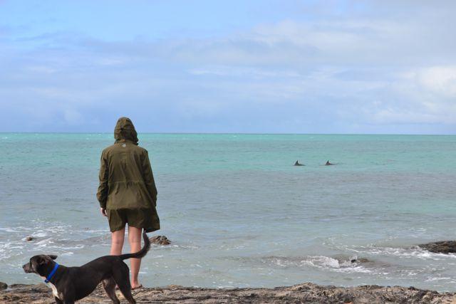 Corny Point dolphins