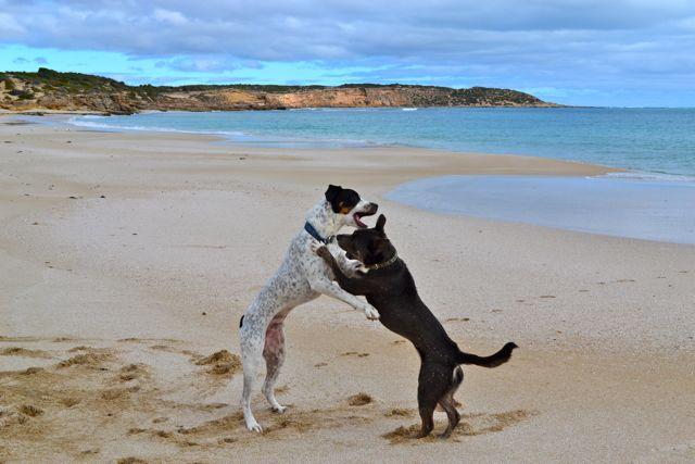 Yorke Peninsula Formby Bay dog friendly