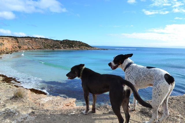 Yorke Peninsula Formby Bay dogs