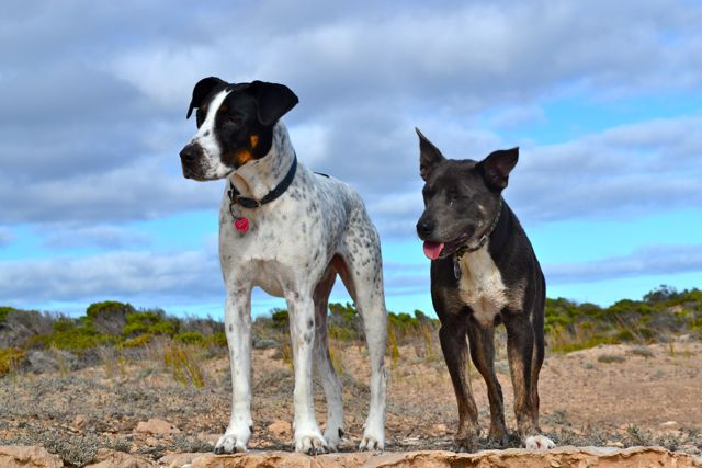 Dog friendly Formby Bay