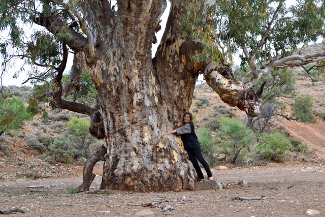 Tree-hugging hippie in Sacred Gorge