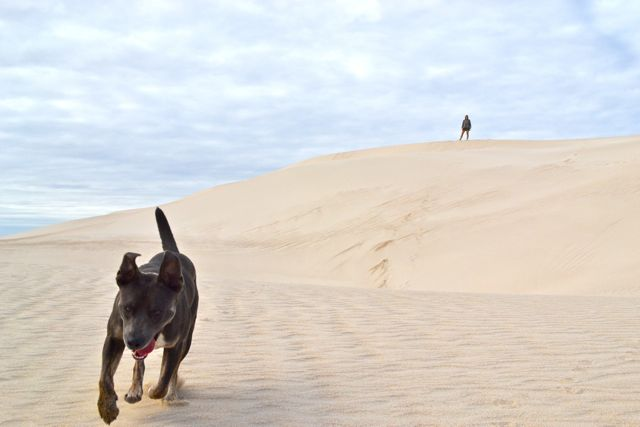 eyre-peninsula-west-coast-point-drummond-dunes-dog-laura-neddy