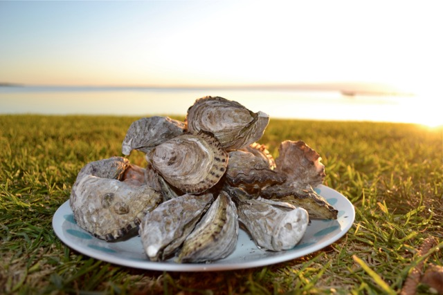 Fresh un-shucked oysters