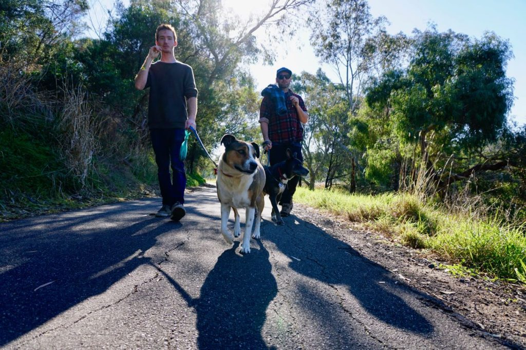 Geelong dog walks