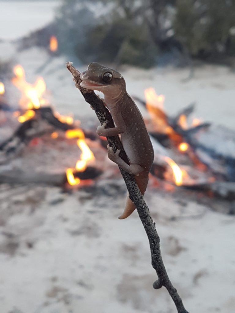 Goog's Track beaded gecko